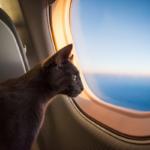 Ընտանի կենդանիները նախընտրում են մասնավոր ինքնաթիռներ
