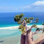 Затерянный остров счастья – Сокотра (Йемен)